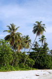 Árvore de coco na praia Fotos de Stock