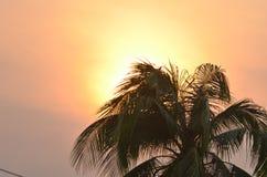Árvore de coco na silhueta do por do sol Fotografia de Stock