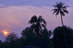 Árvore de coco na silhueta do por do sol Imagens de Stock Royalty Free