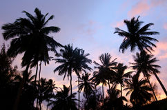 Árvore de coco no cozinheiro Islands da lagoa de Aitutaki Foto de Stock Royalty Free