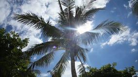 Árvore de coco sob o céu azul e o sol brilhante video estoque
