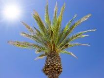 Árvore de coco sob o vento, céu azul Imagem de Stock