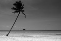 Árvore de coco solitária Imagem de Stock Royalty Free