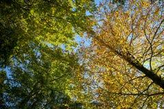 Árvore de Colouful em Autumn Day Fotografia de Stock
