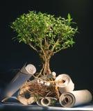 Árvore de conhecimentos Imagem de Stock