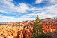 Árvore de Coniferus no ponto do por do sol - Bryce Canyon National Park Fotografia de Stock Royalty Free