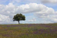 Árvore de cortiça fotografia de stock royalty free