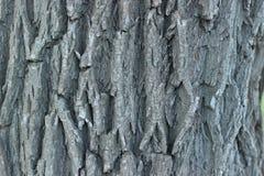 Árvore de cortiça Imagem de Stock Royalty Free