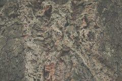 Árvore de cortiça bark cortiça abstrata do carvalho do fundo fotografia de stock
