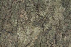 Árvore de cortiça bark cortiça abstrata do carvalho do fundo fotografia de stock royalty free