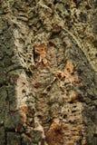 Árvore de cortiça bark cortiça abstrata do carvalho do fundo imagens de stock