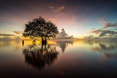 Árvore de cortiça na vila de Pakpra, Phatthalung, Tailândia imagens de stock royalty free