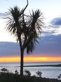 A árvore de couve obscura Foto de Stock Royalty Free