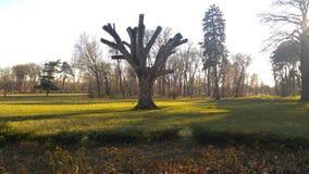 Árvore de Cutted Fotografia de Stock Royalty Free