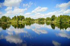 Árvore de Cypress em um lago imagem de stock royalty free