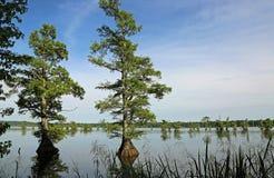 Árvore de Cypress no lago Reelfoot imagem de stock
