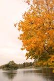 Árvore de desvanecimento na beira do lago Foto de Stock Royalty Free