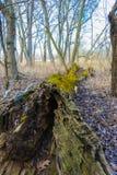 Árvore de deterioração Foto de Stock Royalty Free
