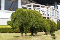 A árvore de dobra de bonsais do elefante Fotos de Stock Royalty Free