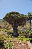 Árvore de dragão imagem de stock royalty free