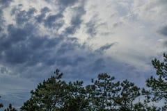 Árvore de encontro ao céu foto de stock royalty free