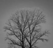 Árvore de encontro ao céu Fotos de Stock