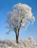 Árvore de encontro ao céu azul Foto de Stock
