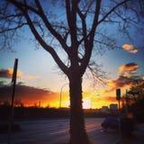 Árvore de encontro ao por do sol Fotos de Stock