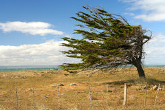 Árvore de encontro ao vento Foto de Stock Royalty Free