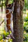 Árvore de escalada do cão Fotografia de Stock Royalty Free