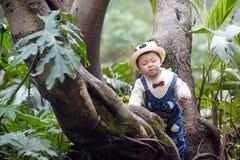 Árvore de escalada do menino foto de stock