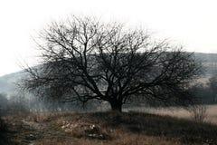 Árvore de espalhamento fotografia de stock