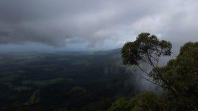 Árvore de eucalipto enevoada da manhã, Jamberoo Novo Gales do Sul Fotografia de Stock Royalty Free
