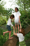 Árvore de família Imagens de Stock