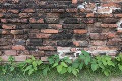 Árvore de figo contra uma parede do jardim em Wat Mahathat Temple, Ayutthaya Fotografia de Stock Royalty Free