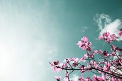 Árvore de figo, cores artísticas da natureza Foto de Stock Royalty Free
