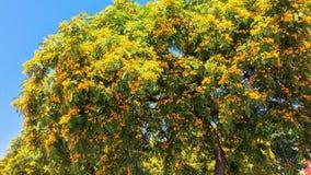 árvore de florescência imagens de stock royalty free