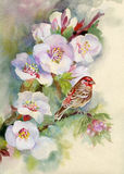 Árvore de florescência coberta com as flores Imagem de Stock Royalty Free