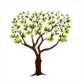 Árvore de florescência da mola imagens de stock royalty free