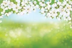 Árvore de florescência da mola do vetor no fundo do bokeh Imagens de Stock
