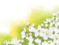 Árvore de florescência de sakura da mola do vetor Fotografia de Stock Royalty Free