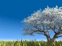Árvore de florescência em um prado fotografia de stock
