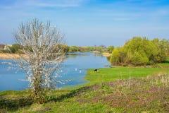 A árvore de florescência no banco de rio, limpa ecologicamente o place_ Fotos de Stock Royalty Free