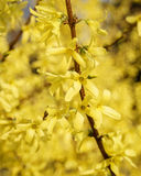 Árvore de florescência no dia ensolarado Fotos de Stock Royalty Free