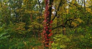Árvore de floresta aérea filme