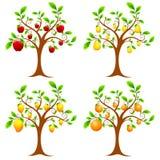 Árvore de fruta ilustração royalty free