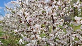 Árvore de fruto na flor filme