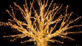 A árvore de Garland Glows And Flickers With as luzes da cor dourada na noite filme
