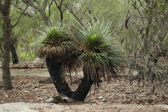 Árvore de grama Fotos de Stock