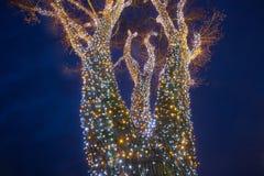 Árvore de iluminação decorada imagem de stock royalty free
